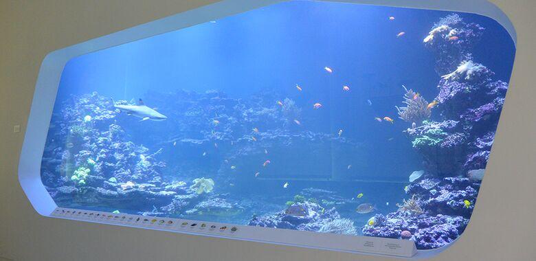 240 000 Liter Meerwasser Hinter Glas