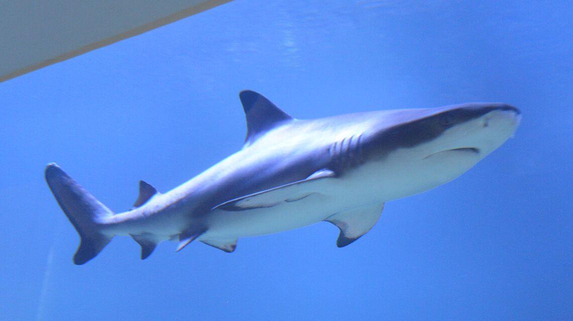 Das Haifischaquarium